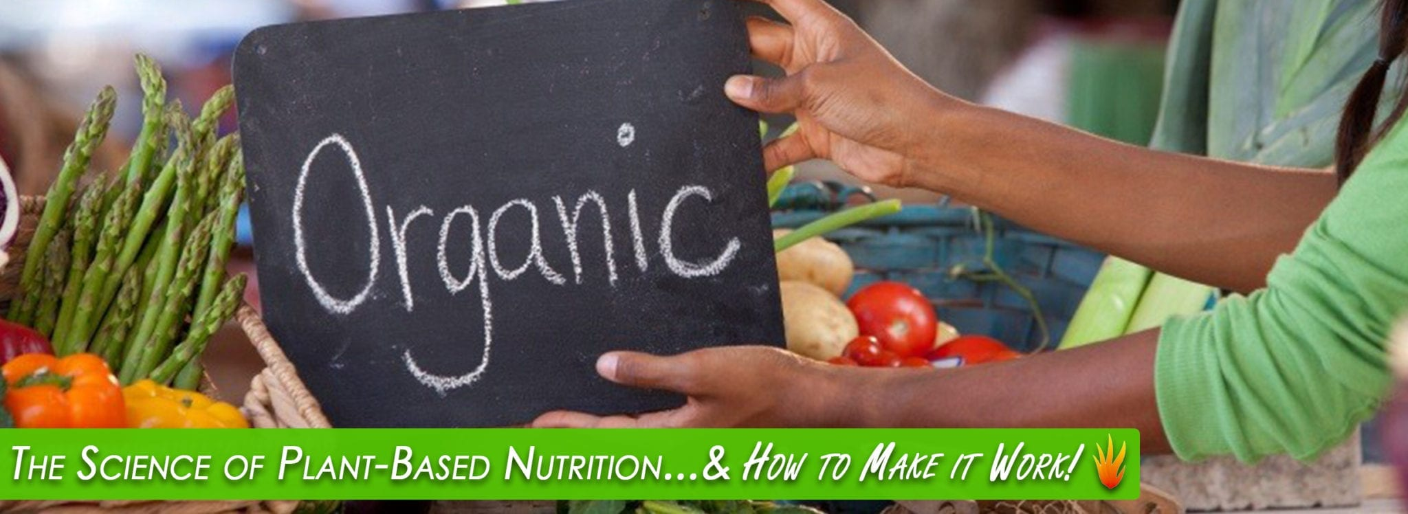 Holistic Nutrition Specialist Certification Energetic Health Institute