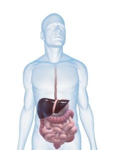 DTOX101 Cleanse Digestive Tract